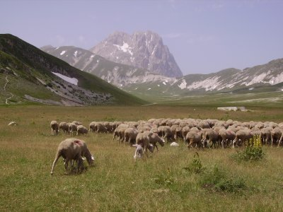 Filippo crudele un poeta dell abruzzo e del gran sasso - La pagina della colorazione delle pecore smarrite ...