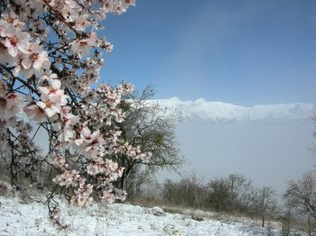 Alberi in fiore e neve di marzo sul Gran Sasso (16382 bytes)