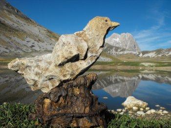 La stessa colomba vista da vicino al Gran Sasso (26480 bytes)